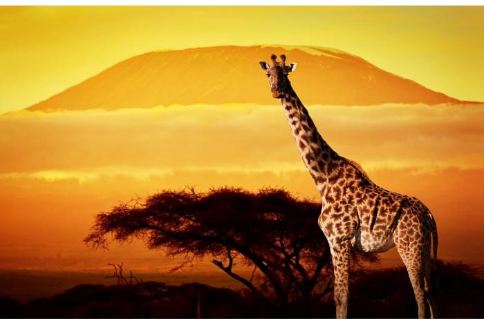 Модульная картина жираф на закате