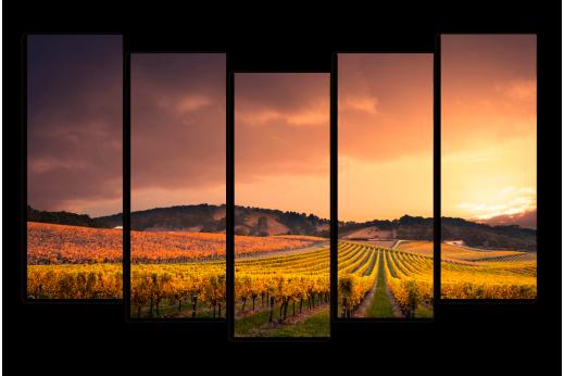 Модульная картина Виноградное поле
